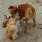 herrlich dieser Sand überall